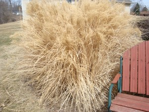 Cutting Down Ornamental Grass