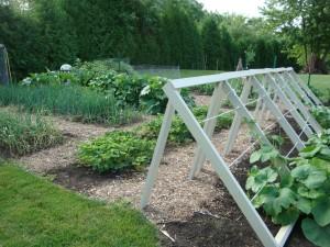 random garden photo's