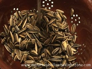 Growing and harvesting sunflower seeds